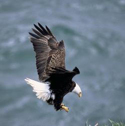 EaglePic