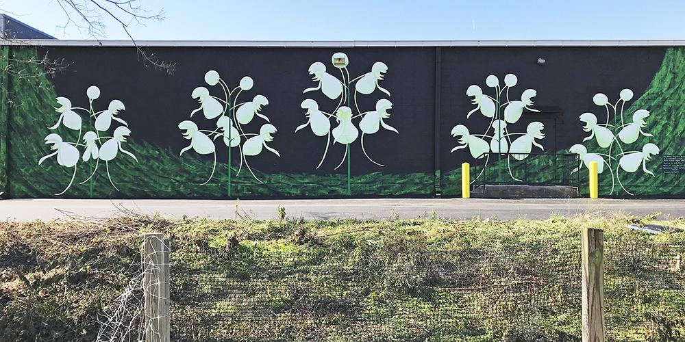 white-fringeless-orchid-mural-2019-Center-for-Biological-Diversity